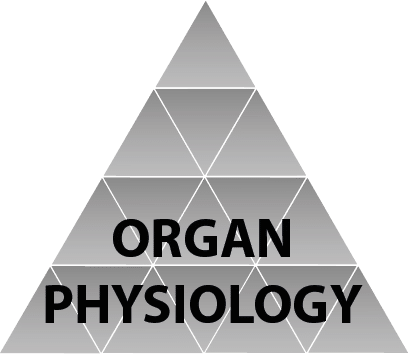 organ physiology