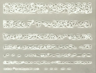 micropatterned cells
