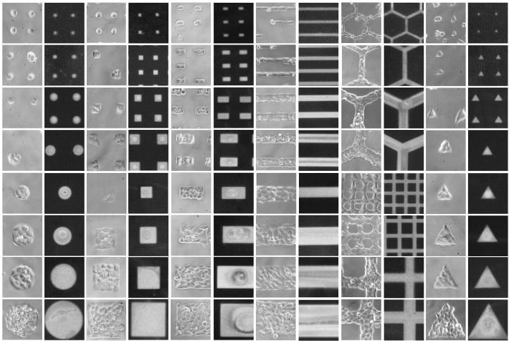 Micropatterned 96 well plates map