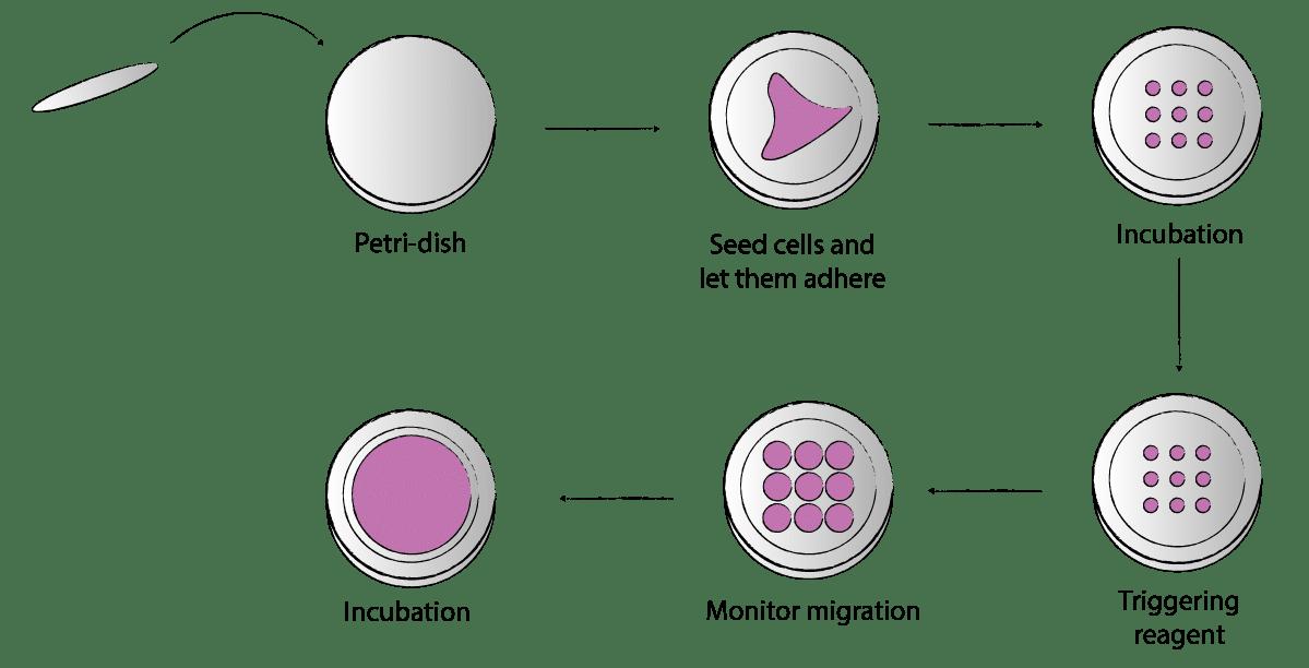 Dynamic micropatterning principle