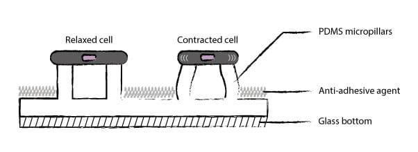 Micropillars principle