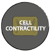 Cell contractility