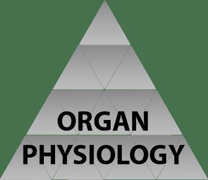 organ physiology