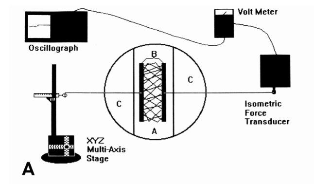 A schematic representation of the isometric force monitoring apparatus