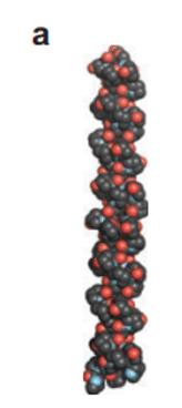 collagen triple helix