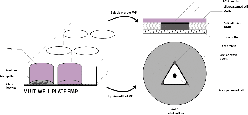 micropatterning