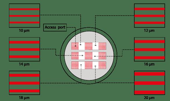 Medium microchannels cell migration